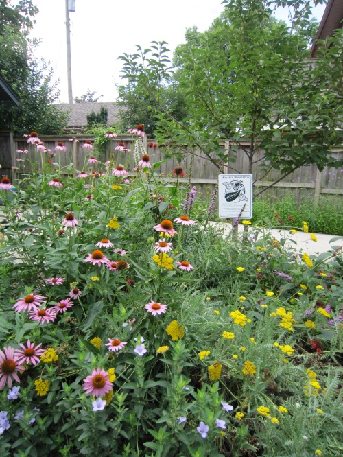 Monarch Waystation Stop 2