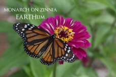 monarchzinnia-webbook