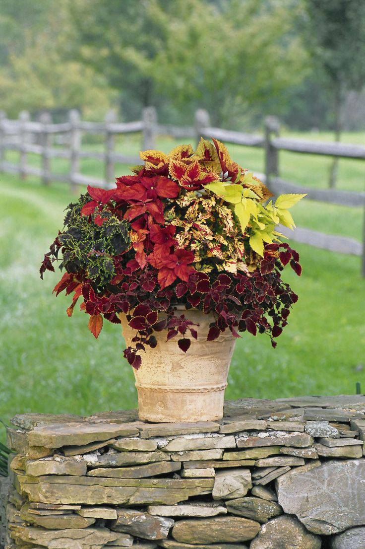 Fall Container & Decor Ideas