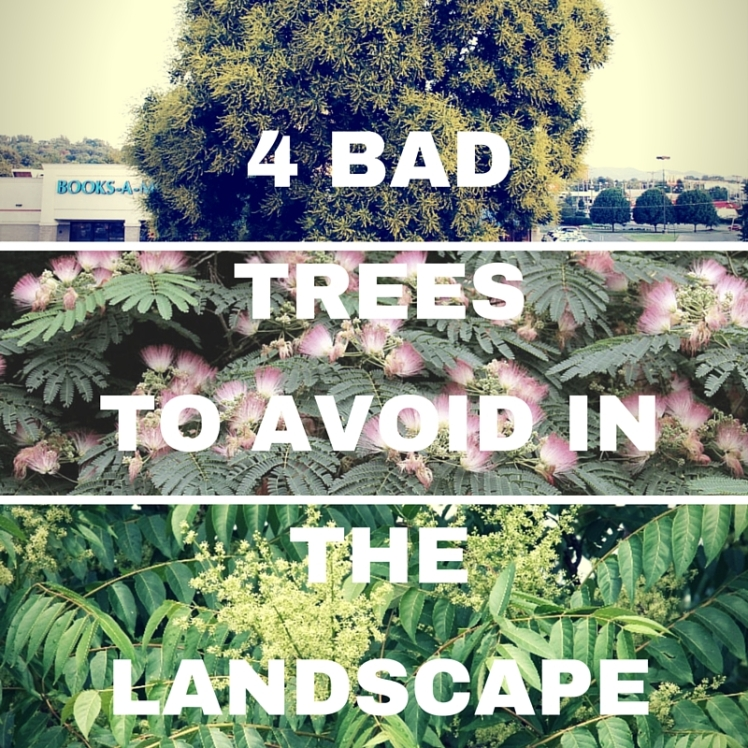 4Bad TreesTo Avoid In TheLandscape