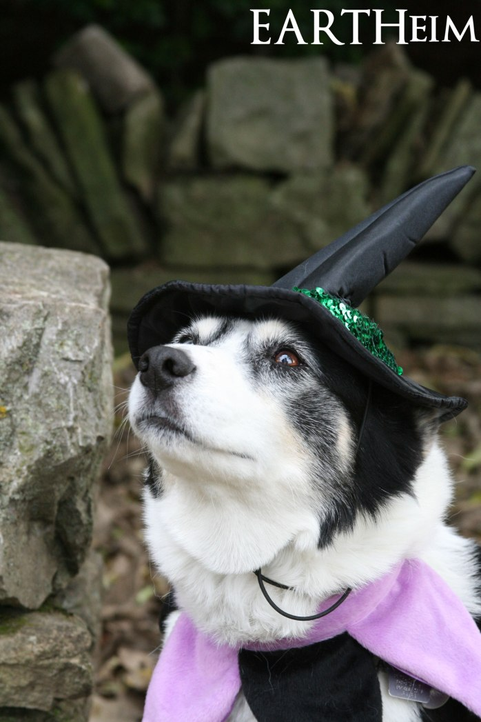 Roxie the Good Witch