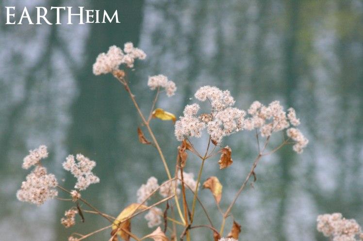 Dried Flower Stalks Against Blue Spring