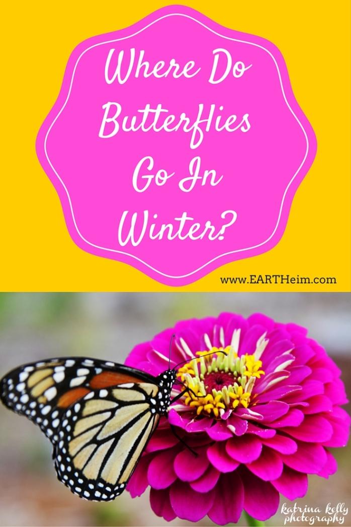 Where Do Butterflies Go In Winter