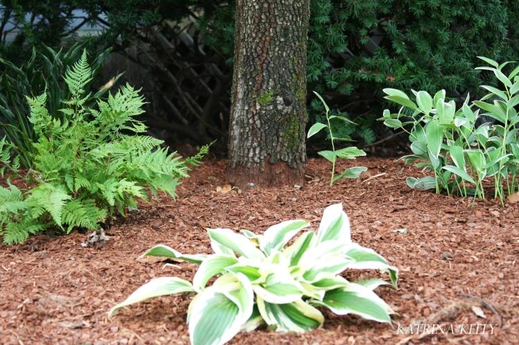 woodland-plants