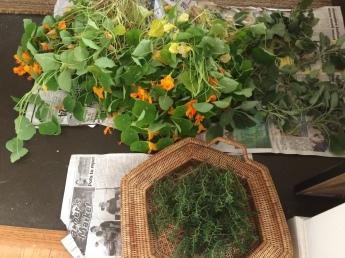 Nasturtium and winter savory