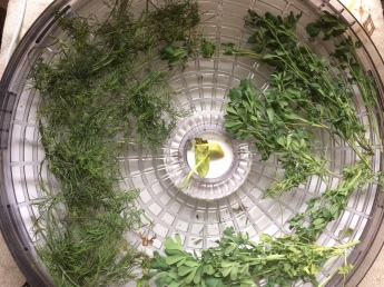 Drying rue, and dill